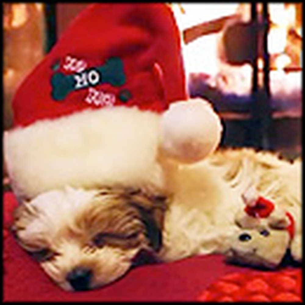 The Most Adorable Christmas in History