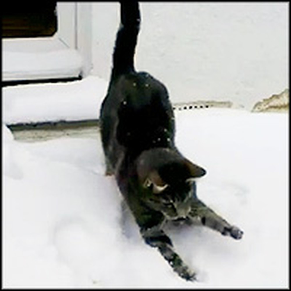 Playful Cat Ventures Into Snow for the First Time