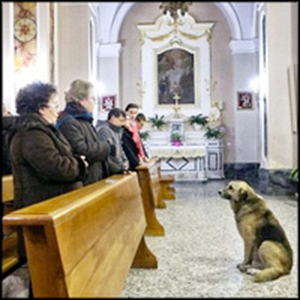 Loyal Dog Attends Church Every Day for his Deceased Owner