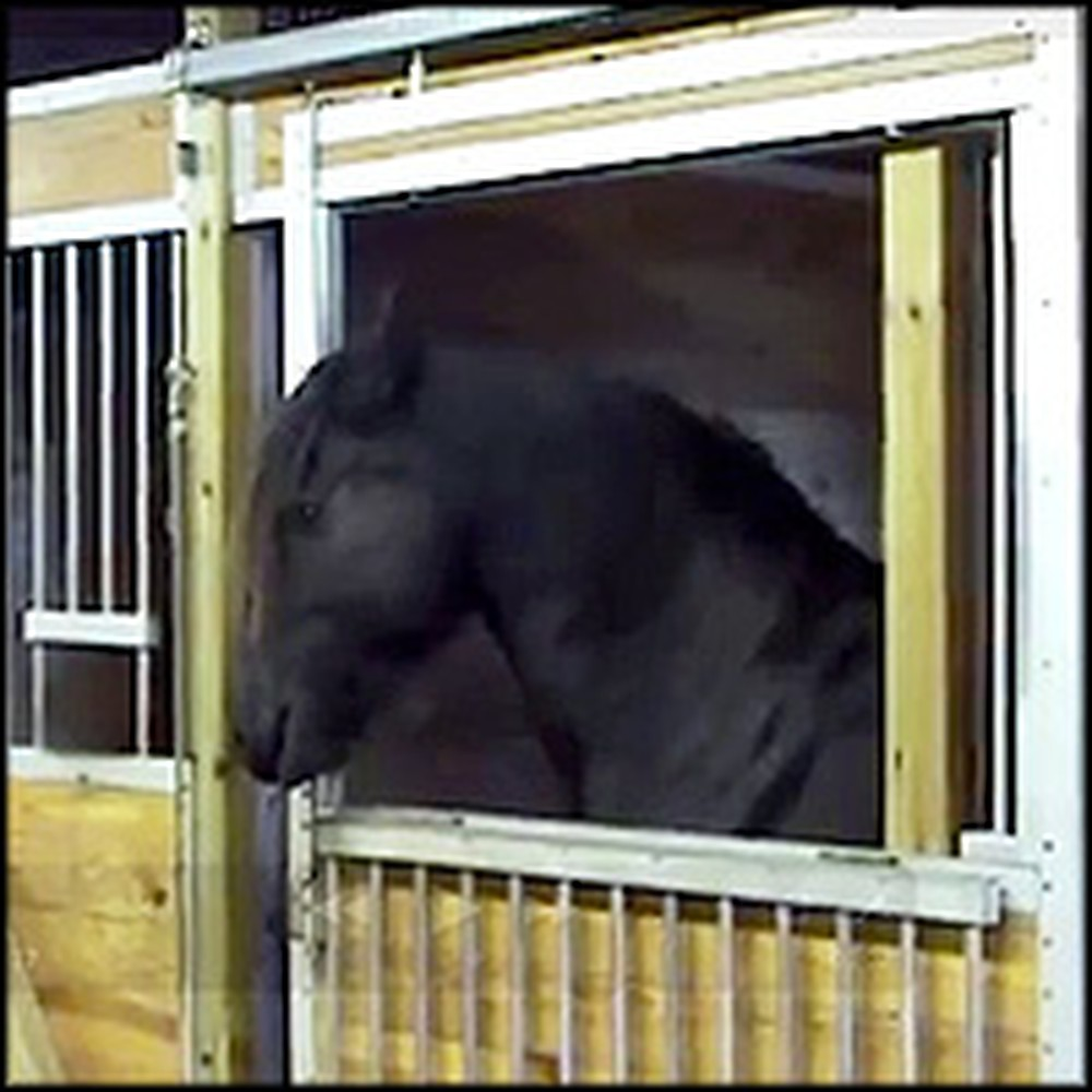 Smart Horse Helps His Pals Escape From a Stable
