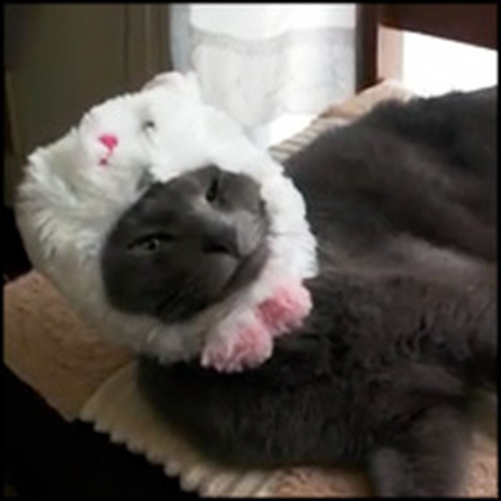 Cute Cat Does the Strangest Thing with a Bunny Hat