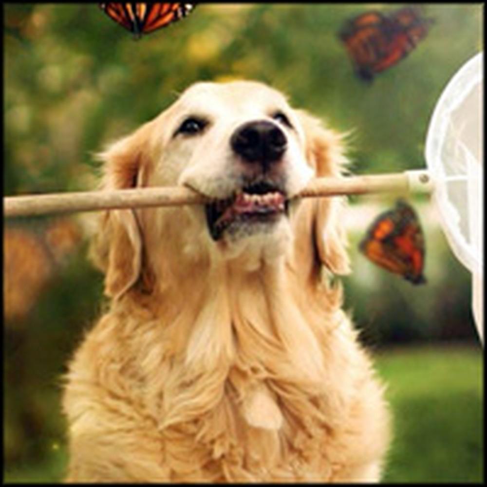 Meet Champ - The World's Happiest Dog