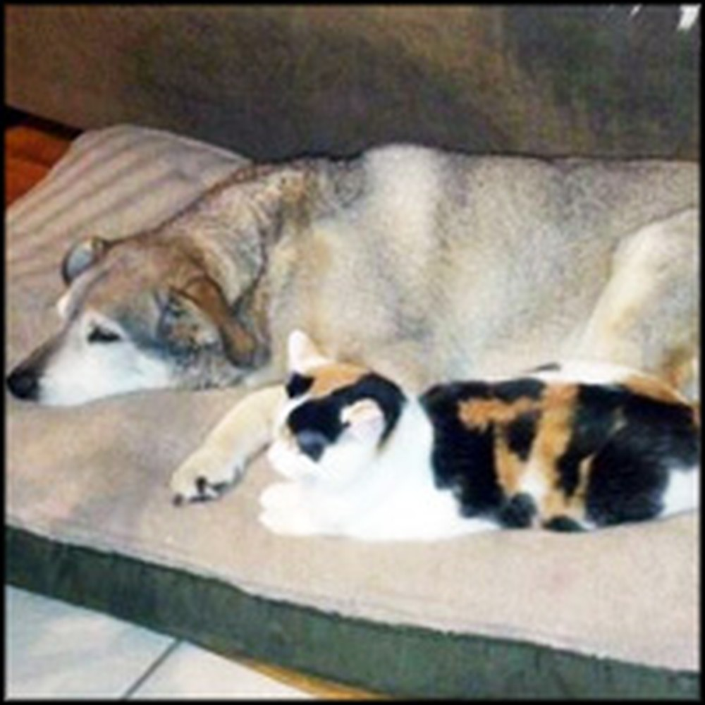 Most Heartwarming Friendship Between 2 Old Animal Pals is So Sweet