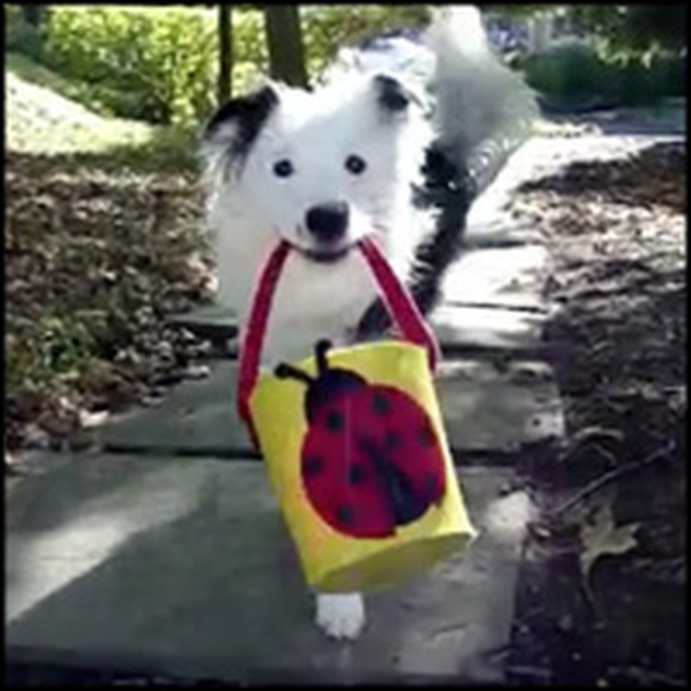 Highly Intelligent Border Collie Will Wow You With Her Tricks