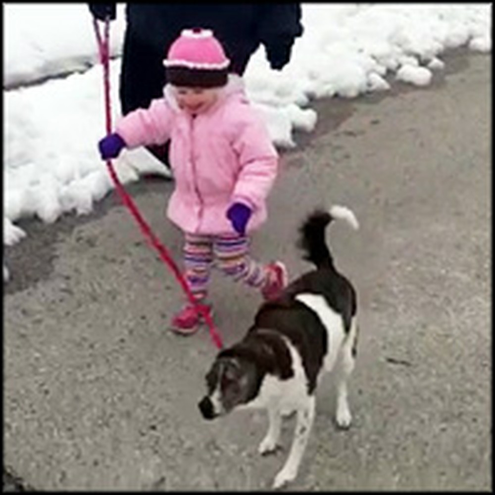 Little Girl Is Delighted To Walk the Dog