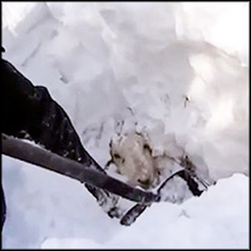 Farmer & Dog Rescue Sheep Buried Alive Under Snow for 3 Days