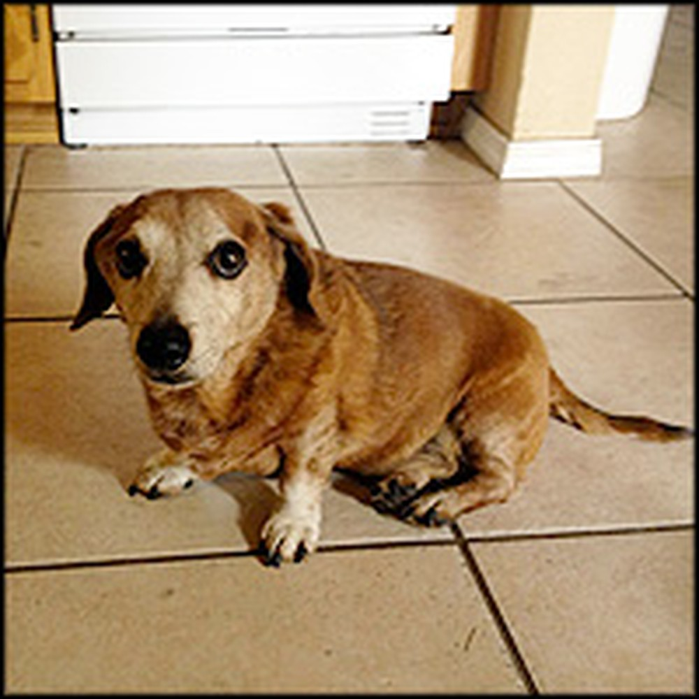 Family Does the Sweetest Thing for Their Aging Dog