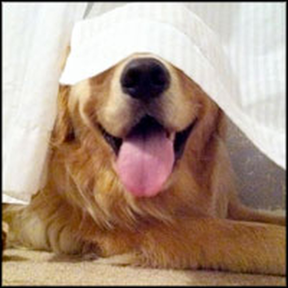 Silly Puppies That are Terrible at Hide and Seek