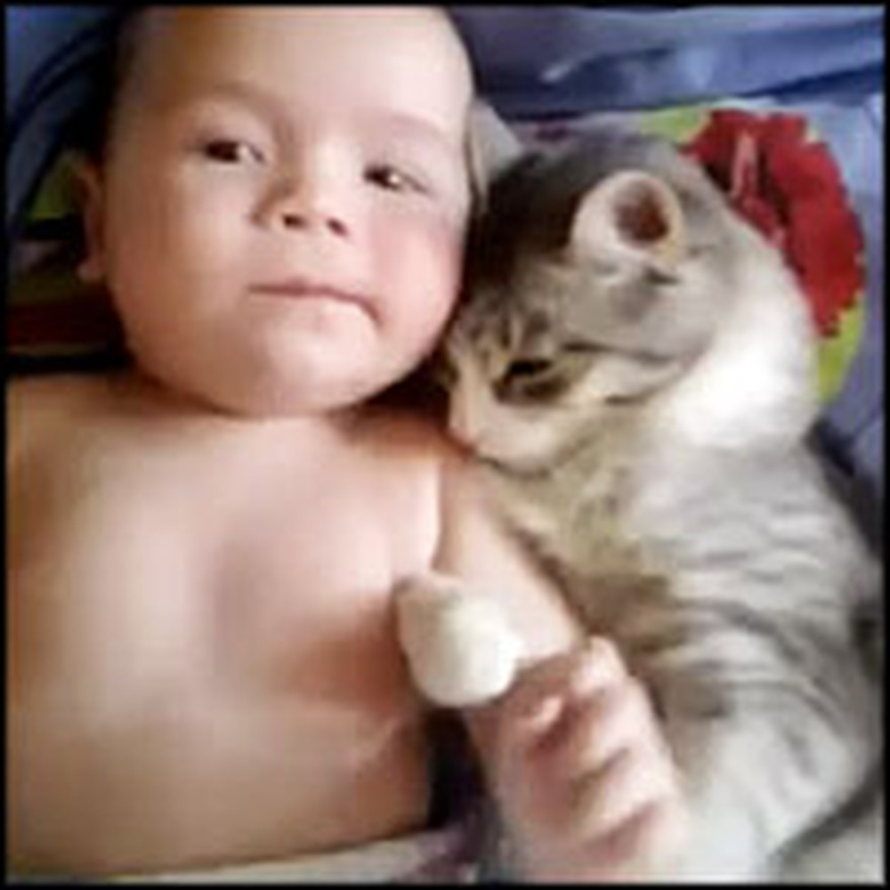 Cat Protects and Cuddles With a Baby - So Cute