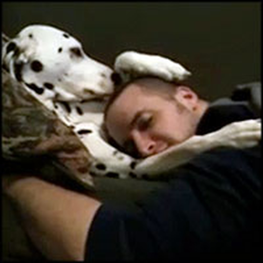 Dalmatian Does the Sweetest Thing to Comfort His Sad Owner