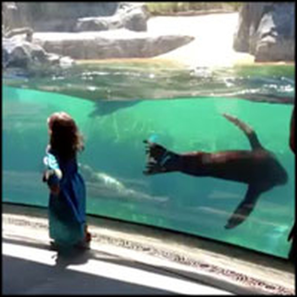Sea Lion Gets Concerned For a Little Girl