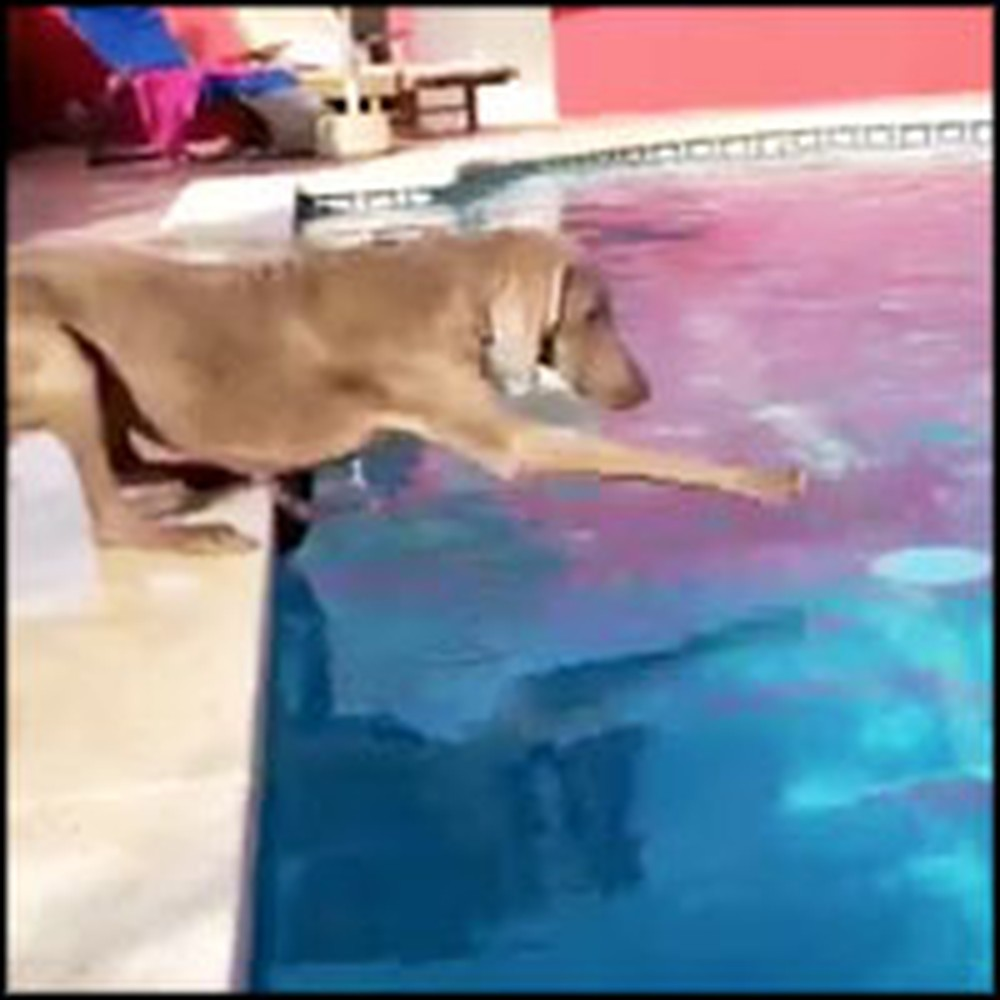 Smart Dog Gets Her Frisbee in a Clever Way