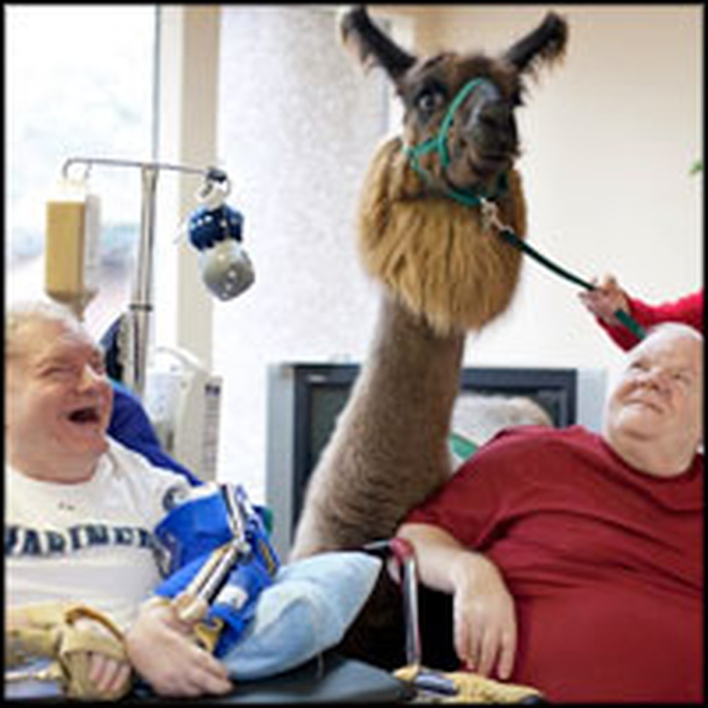 Llama Love Brings Joy to the Lives of Seniors