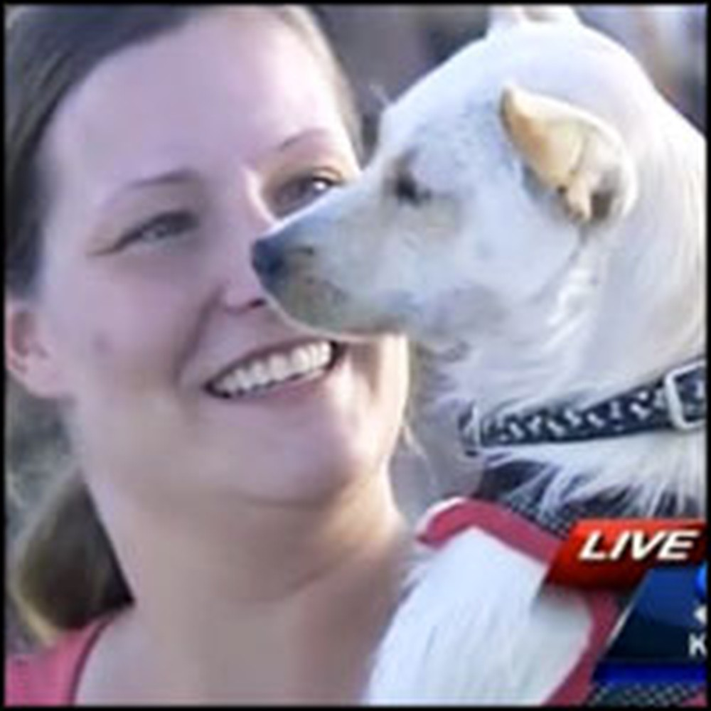 Dog Buried in Tornado Rubble for 2 Days is Miraculously Found Alive
