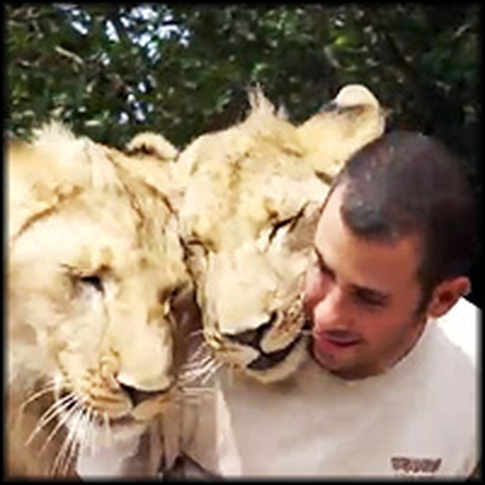 Loving Lions Start Their Day by Cuddling With Human Best Friend