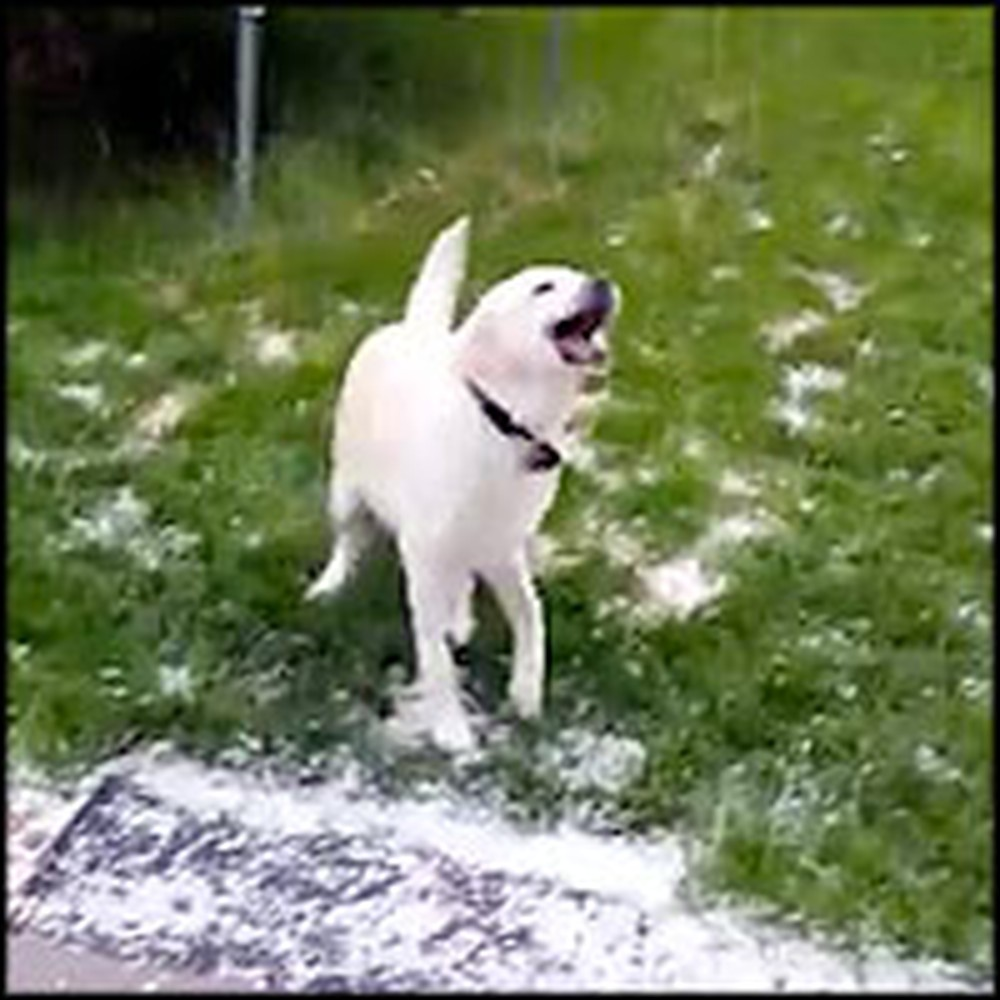 Fun-Loving Dog Tries to Catch Tiny Hail in his Mouth