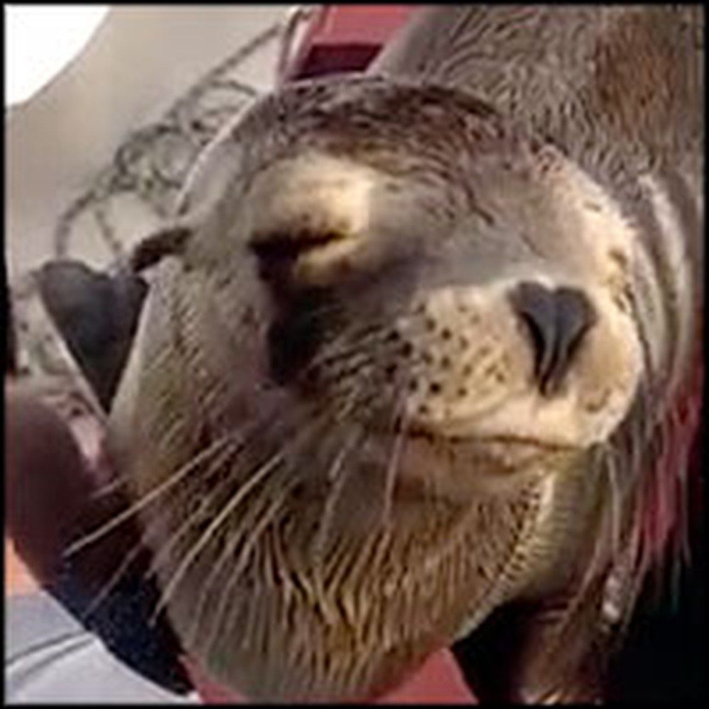 Baby Sea Lion Suddenly Boards Boat and Snuggles with Humans