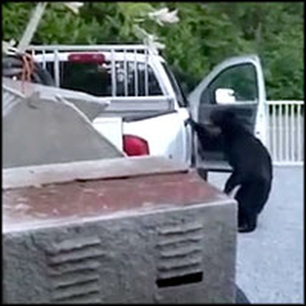 Family Catches a Black Bear Rummaging Through Their Car