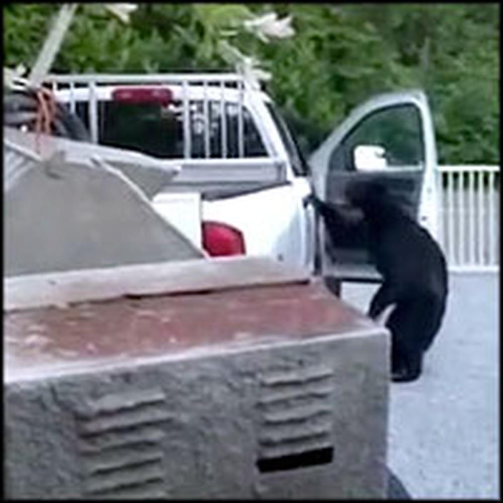 Family Catches a Black Bear Rummaging Through Their Car