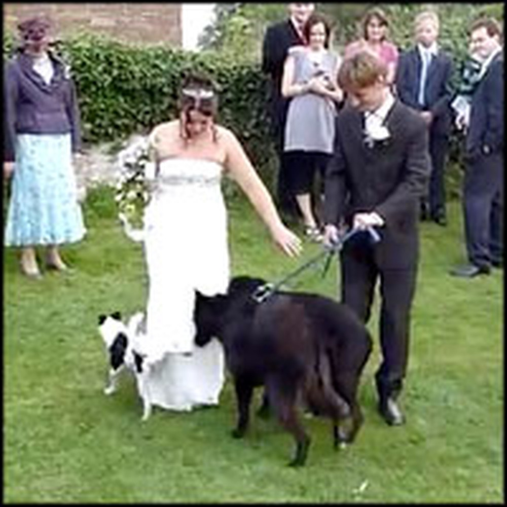 Dog Gives a Bride a Special Wedding Present - LOL!