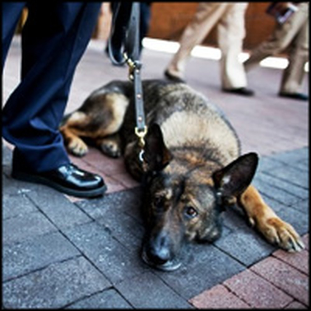 Police Dog Sacrificed His Teeth to Save Handler