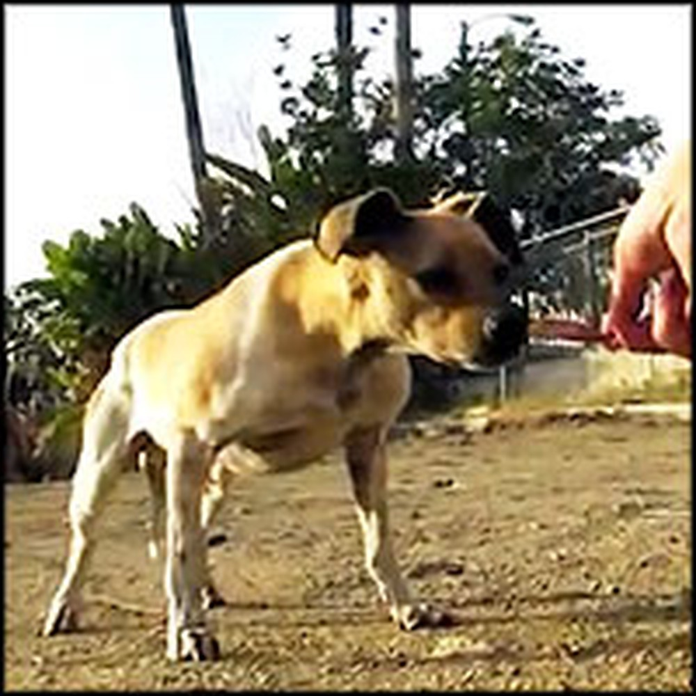 Frightened & Vicious Homeless Dog Completely Transforms Because of Love
