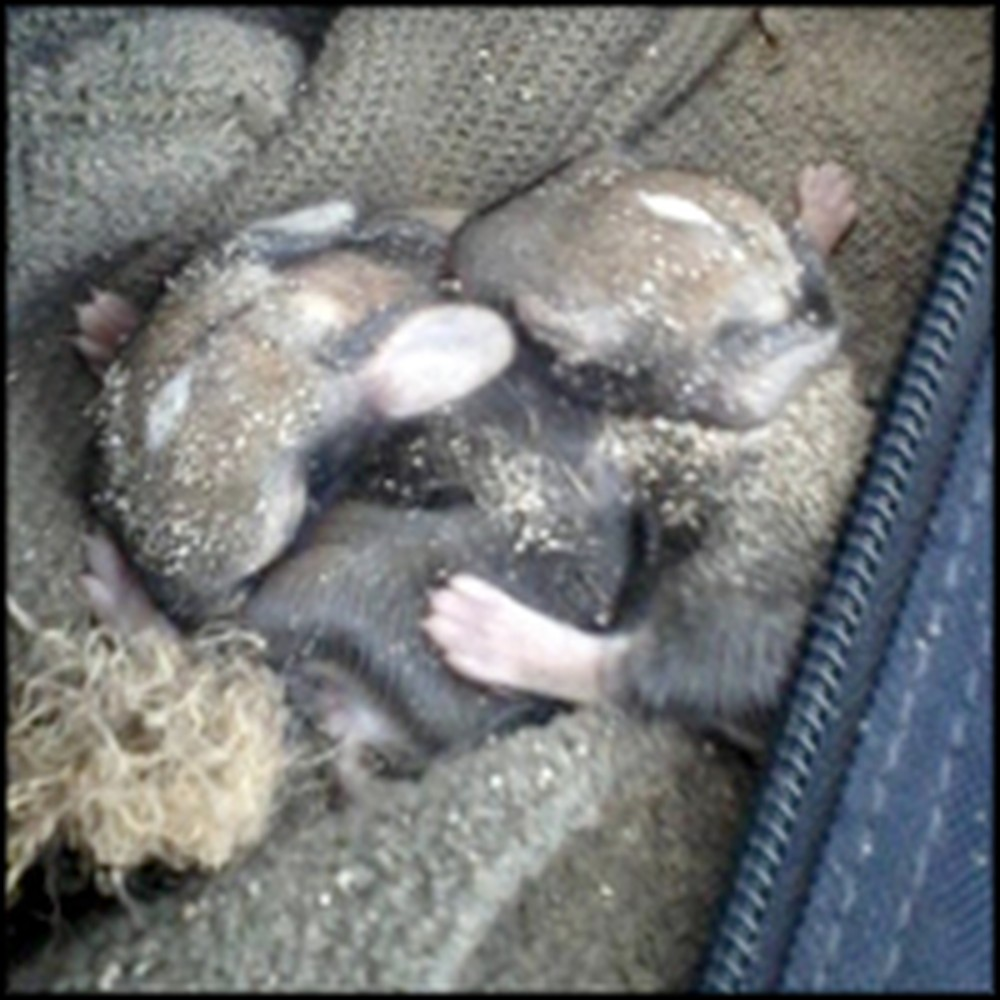 Marine Rescues 4 Baby Rabbits From Death