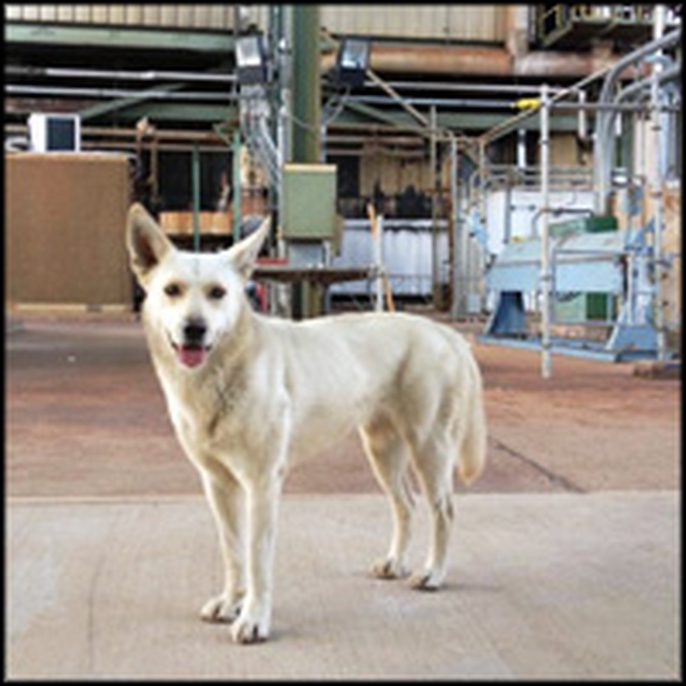 Power Plant Worker Finds Stray Dog a Home