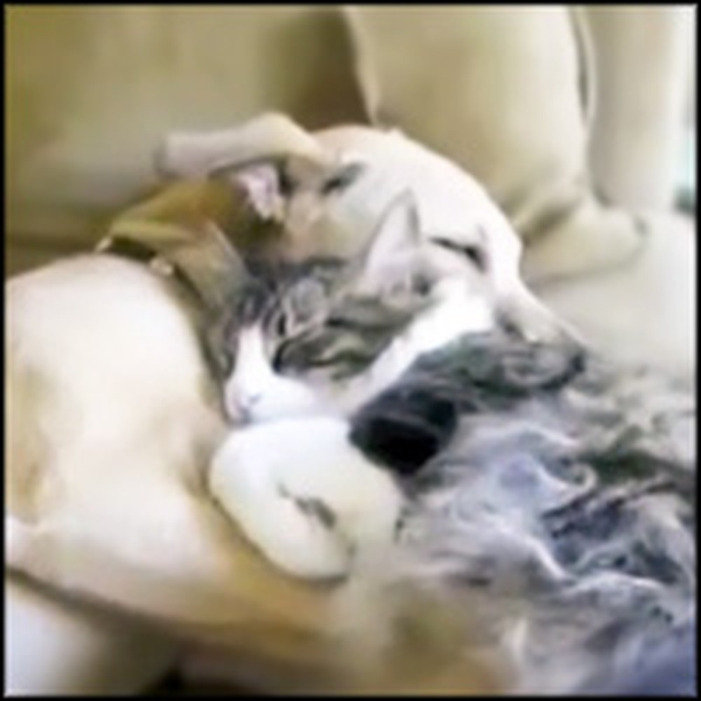 Affectionate Cat Can't Stop Cuddling With Her Doggie Friend