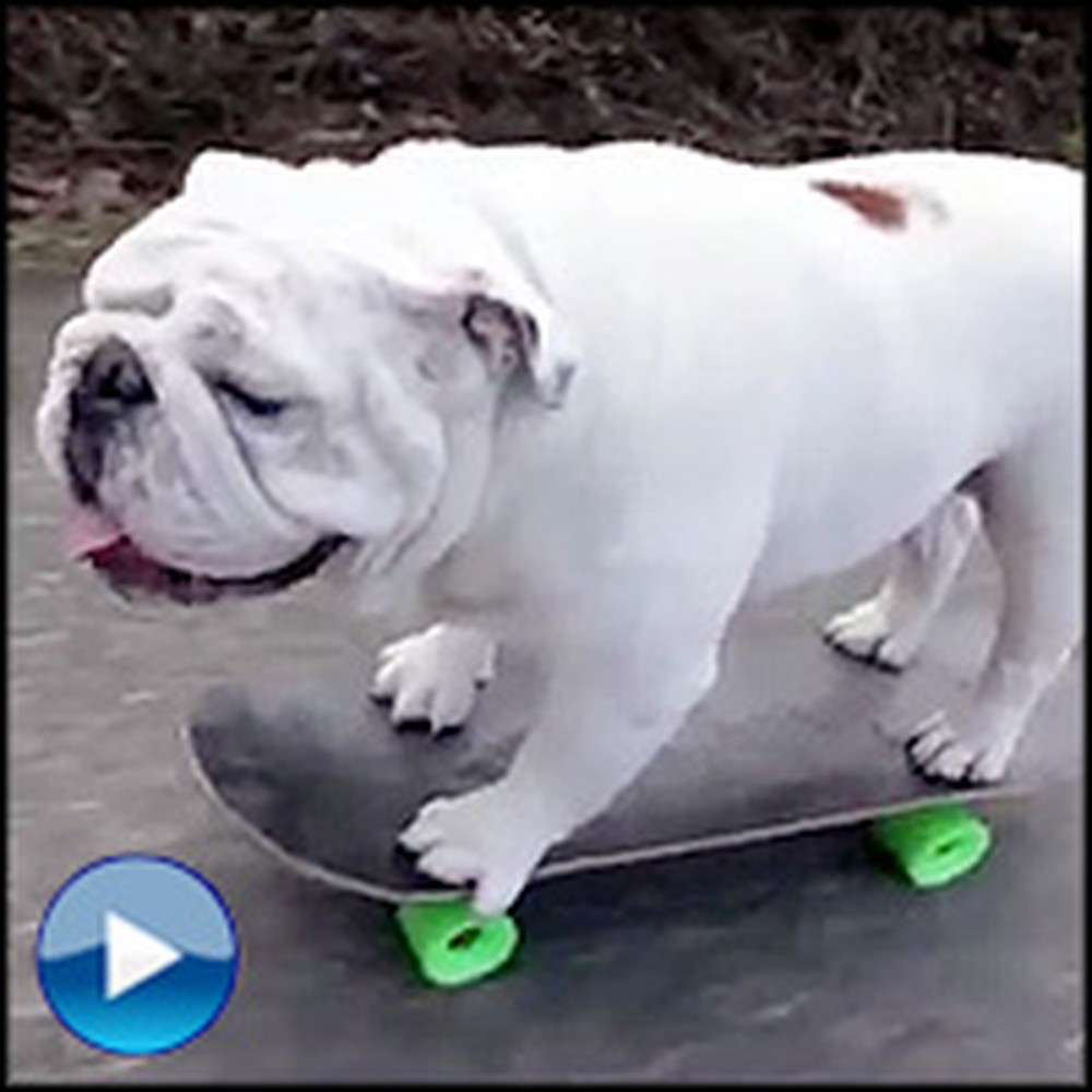 Smart Bulldog Knows the Most Impressive Tricks