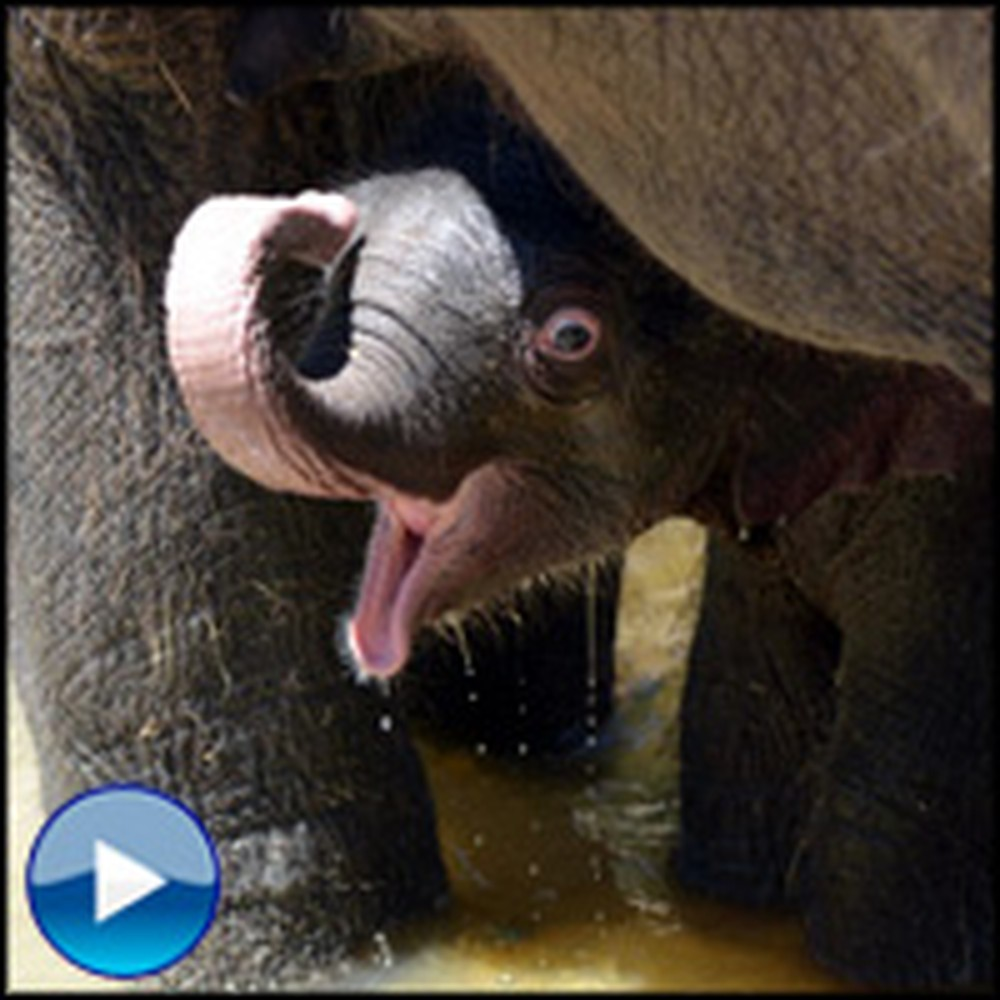 Joyful Baby Elephant Blissfully Enjoys a Bath - It'll Make You Smile