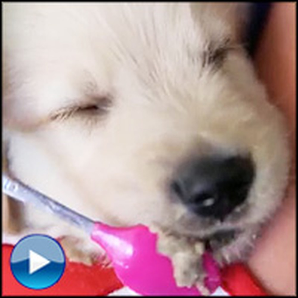 Fuzzy Puppy Gets Spoon Fed Dinner - The Cutest Video Ever!