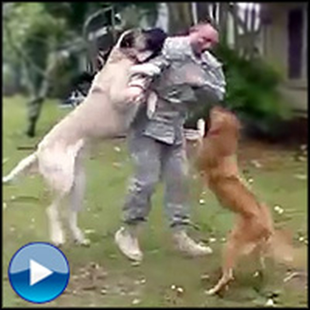 Two Giant Dogs Welcome Home Their Soldier Daddy