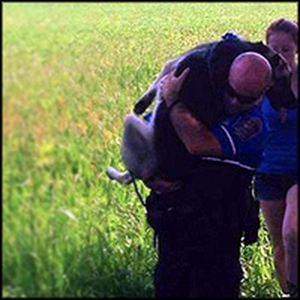 Heroic Police Officer Carries Injured Dog to Safety - Incredibly Touching Scene