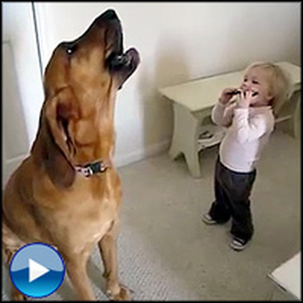 Toddler and Dog Perform a the Cutest Duet You'll Ever See