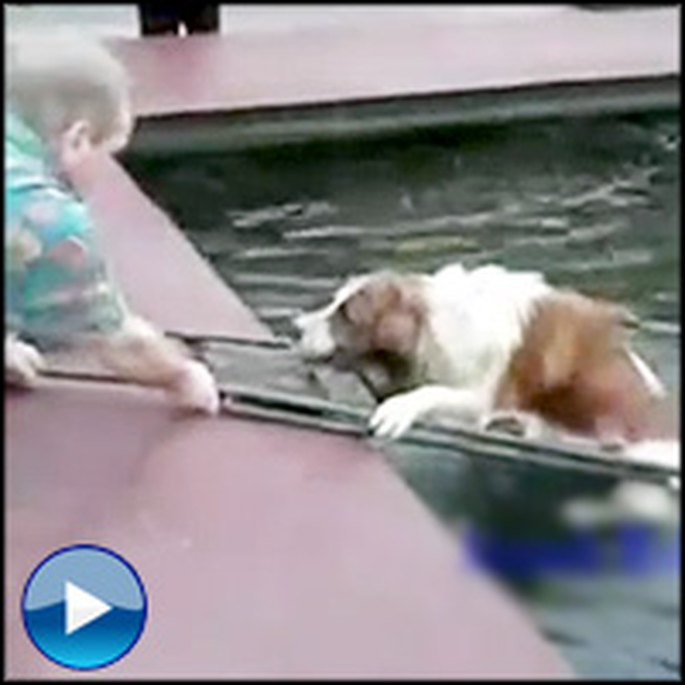 The Most Inspiring Dog Rescues You'll Ever See - a Must-See Compilation