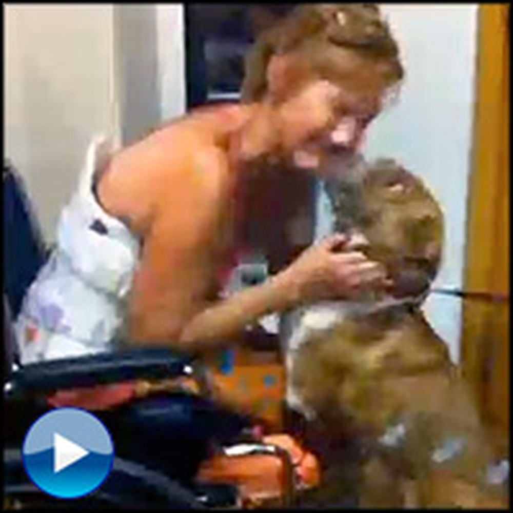 This Dog Survived the Unimaginable to Find Her Owner - Incredibly Touching