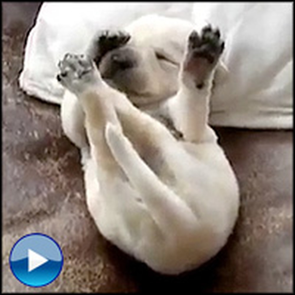 This Hilarious Video Will Make You Wonder What Doggies Dream Of