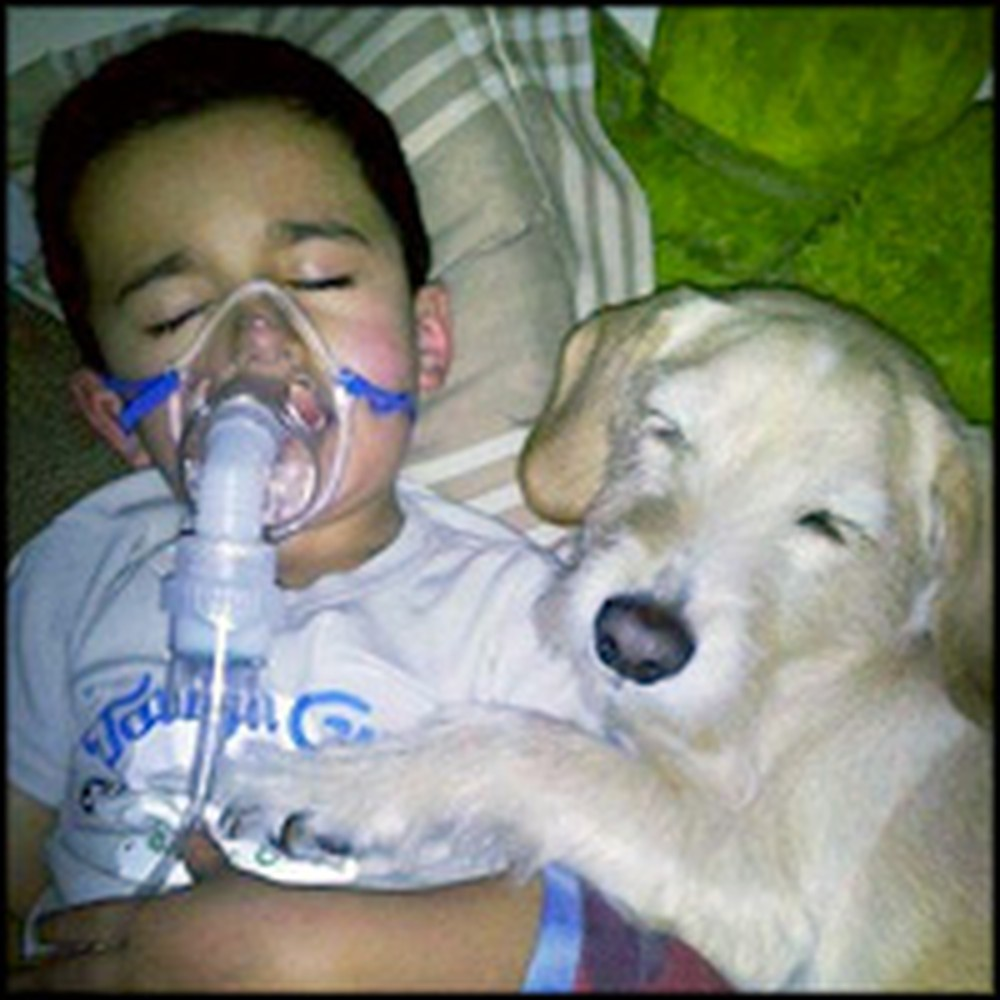 One Dog's Love for a Sick Little Boy is So Heartwarming