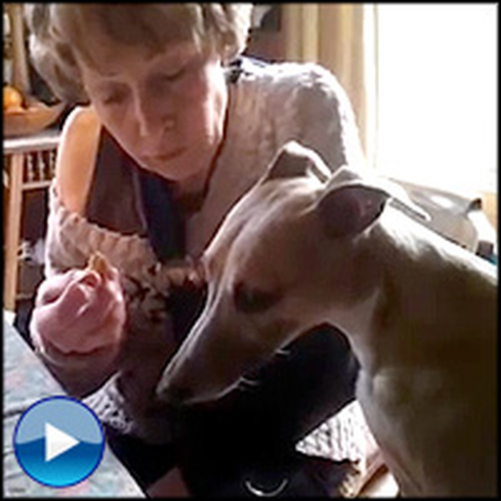 Smartypants Puppy is So Polite to His Momma - See What She Does