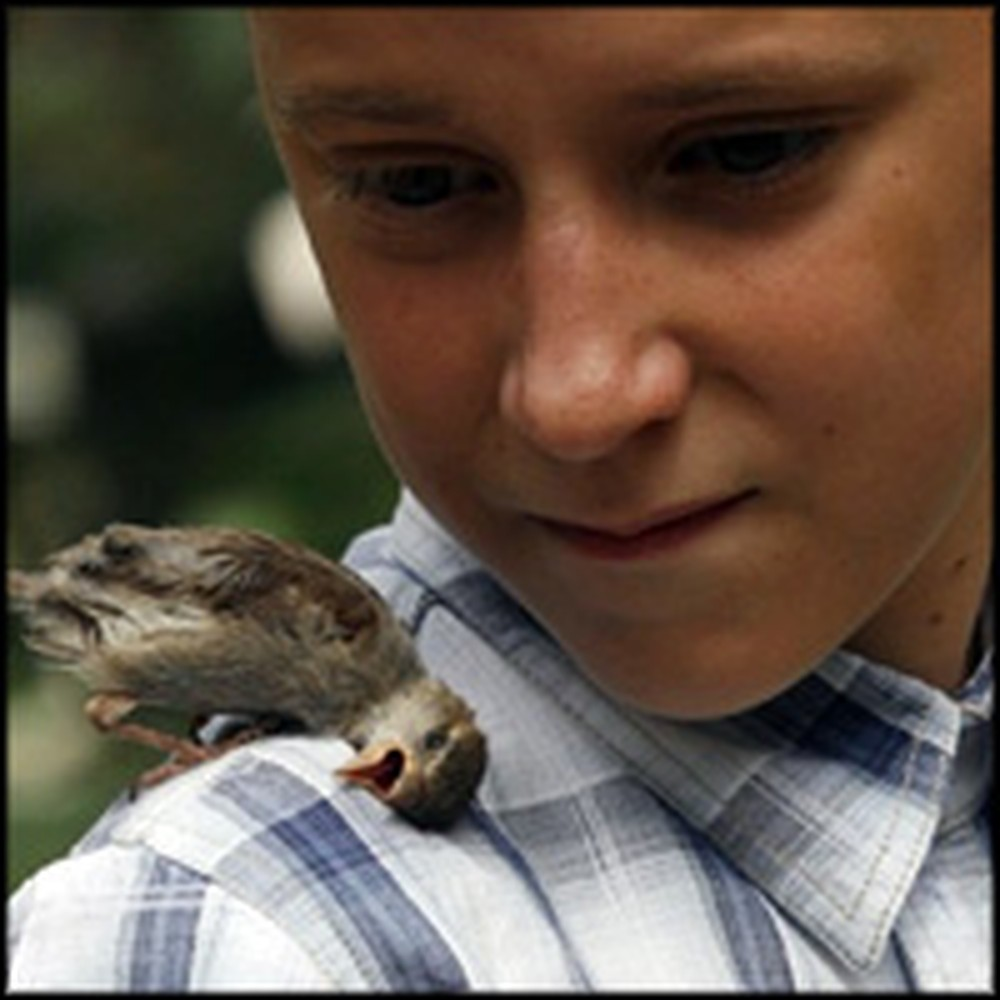 Little Boy Keeps His Eye on the Sparrow - a Touching Animal Friendship
