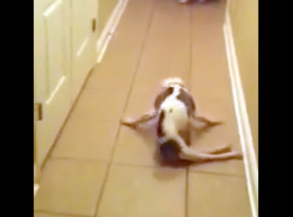 Paralyzed Dog Rushes to Door to Greet Deployed U.S. Airman