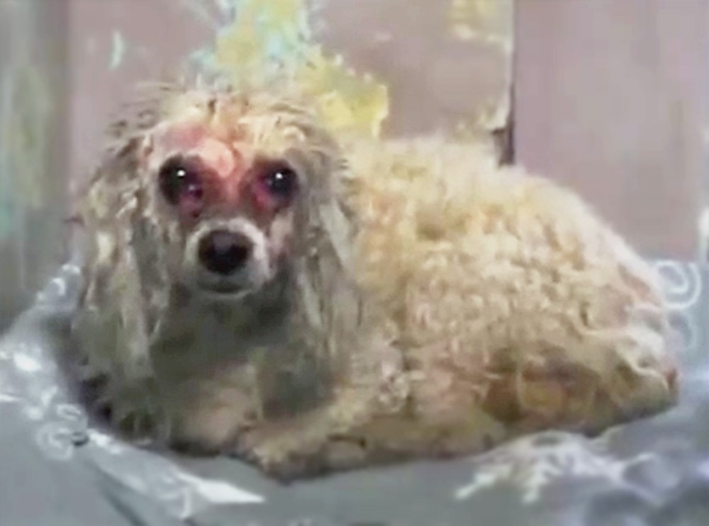 This Neglected Dog Would Have Died If It Weren't for One Good Samaritan