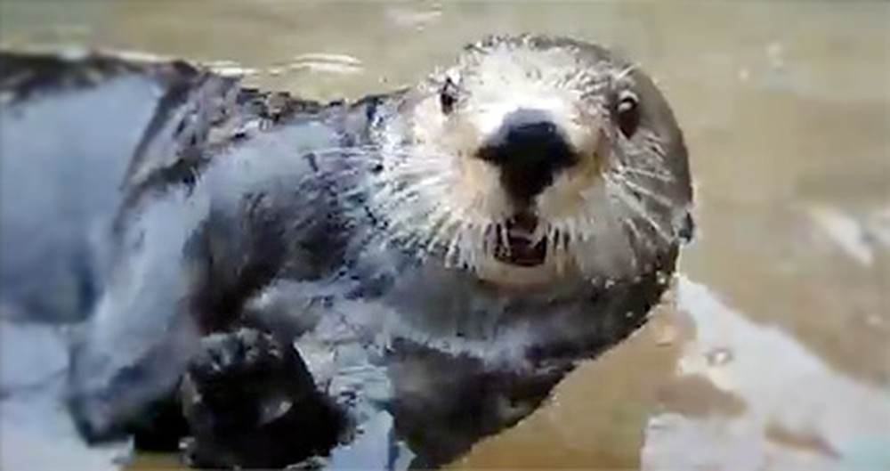 Listen to the Conversation an Otter and Girl Have - Too Funny!