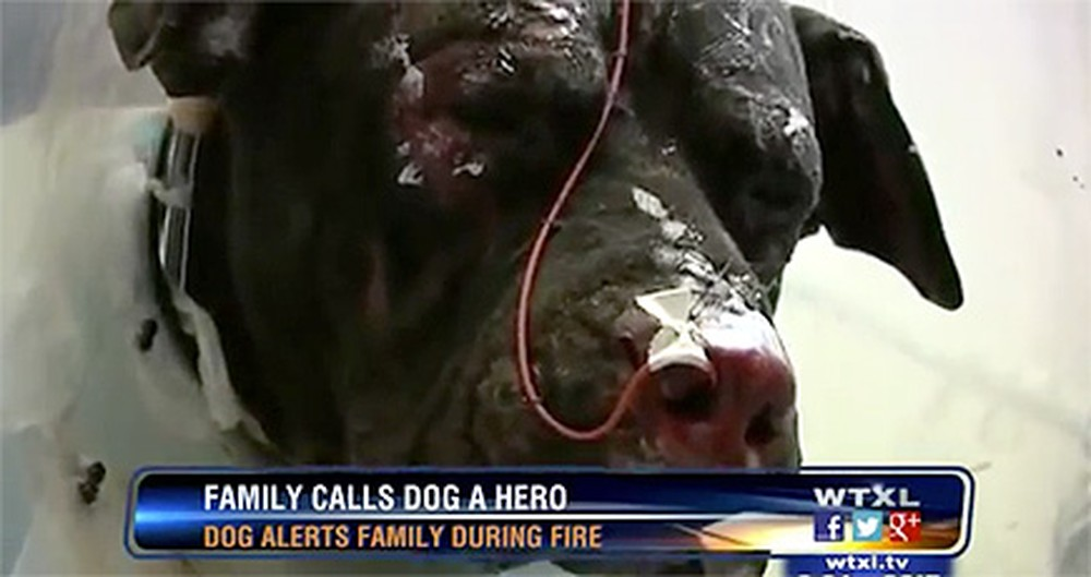 This Family Owes Their Lives to a Canine Guardian Angel - His Act of Heroism is Amazing.