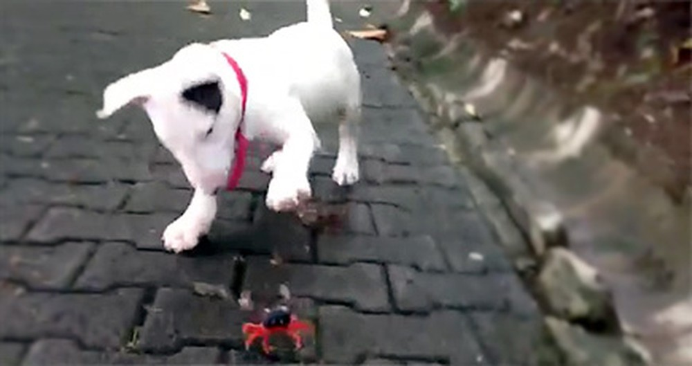 Cuteness Overload! When a Dog Meets a Crab What Happens is Too Precious.