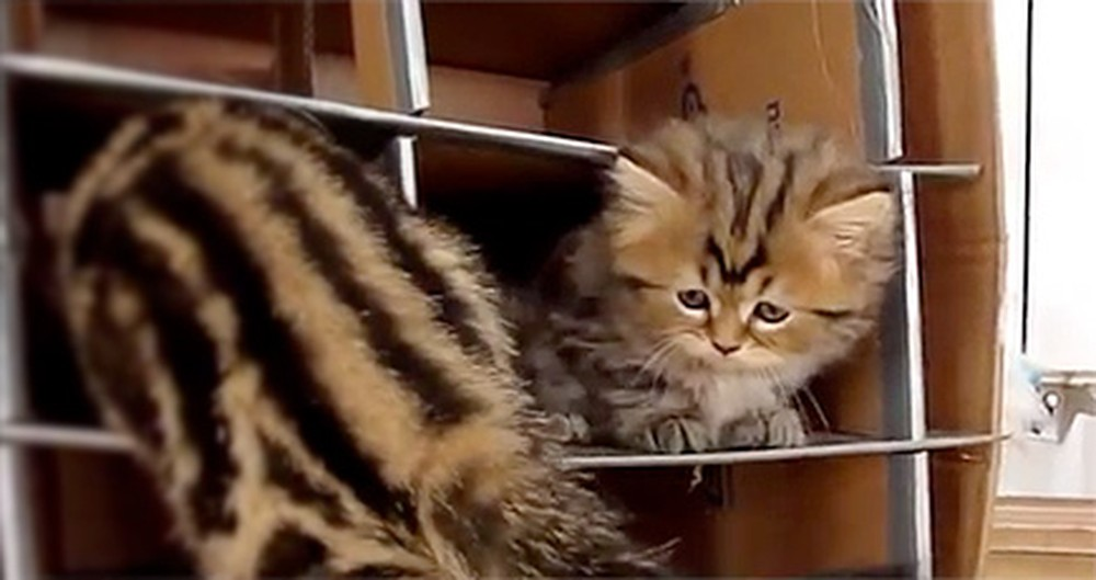 An Adorable Family of Kittens Plays Together Just to Melt Your Heart