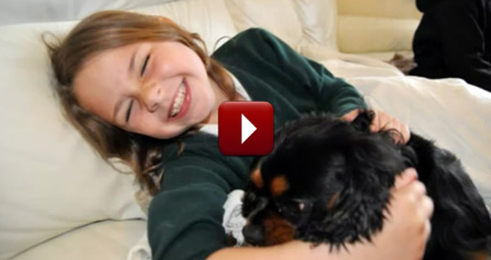 Dog Lost for 22 Months Reunites with his Owners - So Heartwarming