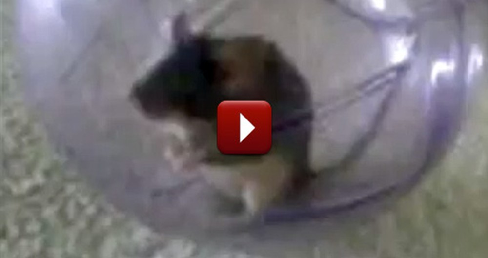 This Talking Mouse Will Make You Crack Up - Too Funny