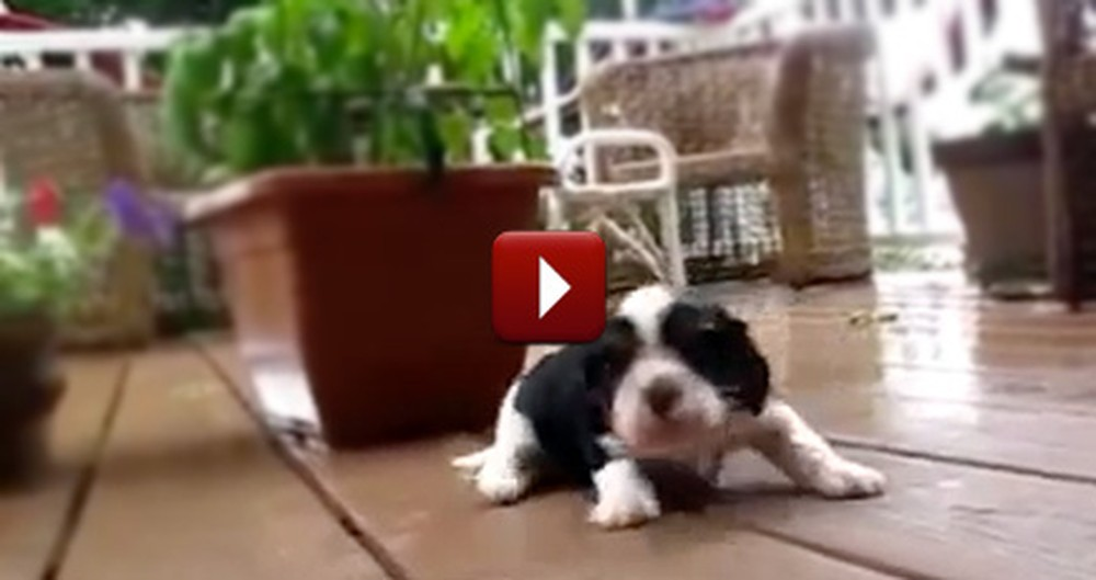 This Compilation of Puppies Learning to Walk is the Cutest Thing